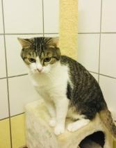 Leopold (3)